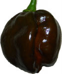 PEPPER, CHOCOLATE HABANERO
