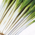 ONION, WHITE SPEAR
